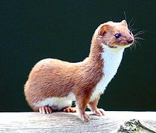 Weasel Words from the 'Wronged' as car insurers try to shift blame for inflated premiums